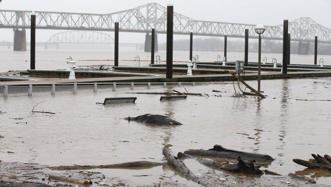 A cow carcass washed up near Waterfront Park in Louisville.