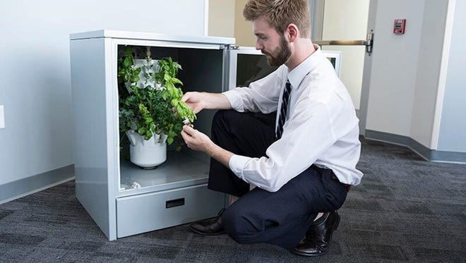 Scott Massey, Heliponix LLC chief executive officer, examines the development of plants growing in a GroPod, a dishwasher-sized appliance that fits under a kitchen counter and grows produce year-round. Heliponix was among five companies selected to receive $80K investments from the Elevate Purdue Foundry Fund.