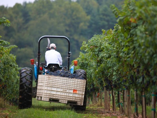 The Biltmore Estate does grow some of its own grapes,