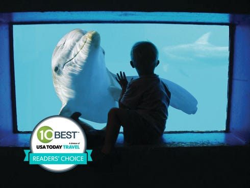 The Clearwater Marine Aquarium was voted best attraction in Florida by 10Best.com and USA TODAY readers.