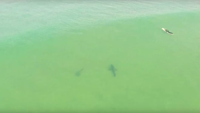Footage of sharks swimming near surfers was caught on drone camera.