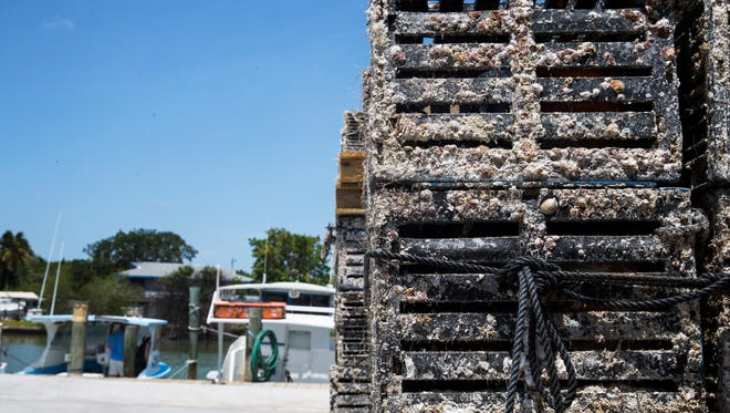 Thousands of crab traps line the docks at Kirk Fish Co. in Goodland, Fla., on Saturday, May 13, 2017. Stone crab traps must be removed from the water within five days after the close of the stone crab season on May 16.