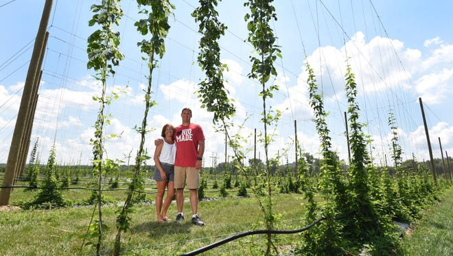Jared and Jenny Cox have planted an acre and a half of hops in front of their home on Gene Cox Memorial Drive in Dresden.