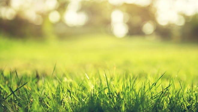 Close up of green grass.