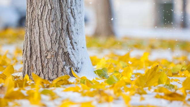 A mixture of snow and fall leaves cover the ground following the first snowfall of the season in Cedar City, Thursday, Nov. 17, 2016.