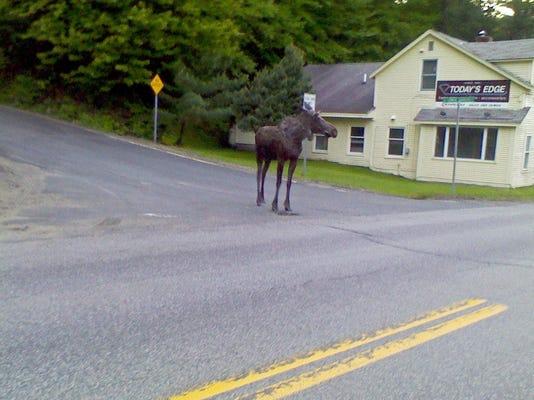BUR 0531 Vermont Beauty