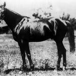 1894 Kentucky Derby winner, Chant.