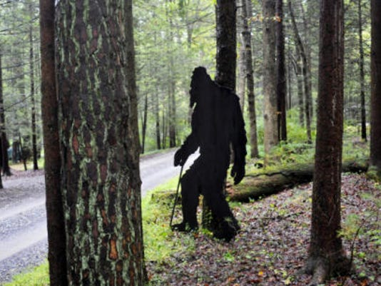 A plywood cutout of Bigfoot lurks along Corls Road, ready to surprise passing motorists and pedestrians in Caledonia.