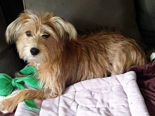 Coco is a 6-month-old,15-pound, female terrier mix.
