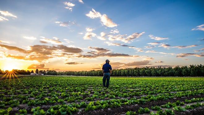 Farmer Jay Hill takes a self portrait in a lettuce field on Hill Farms.