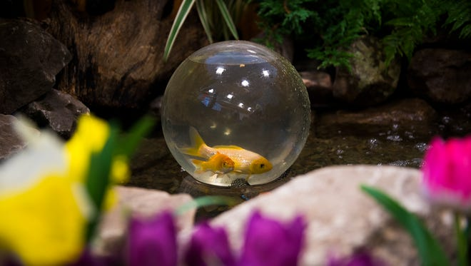 Koi fish swim inside a koi globe at Songbird Ponds booth during the 64th annual Hanover Builder's Home and Garden Show in 2016. The 65th annual show will run March 9-11 this year.