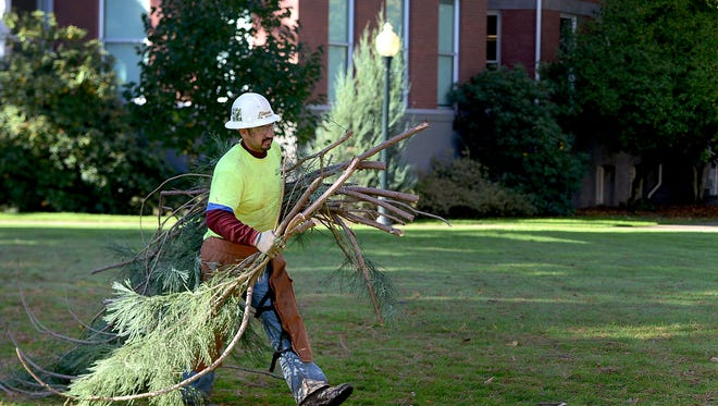 Workers from Elwood's Tree Service take care of damage from this weekend's wind storm on the Star Trees on the Willamette University campus in Salem on Monday, Oct. 27, 2014. The five trees planted by the Class of 1942 as a farewell gift are the largest sequoias on any college or university campus in the U.S.