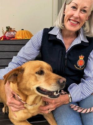 Peggy Glenn, seen with adoptable dog Zeus, is a regular volunteer with the Aiken County Animal Shelter.