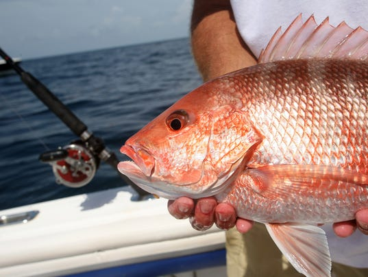 Florida Fishing Red Snapper Fish