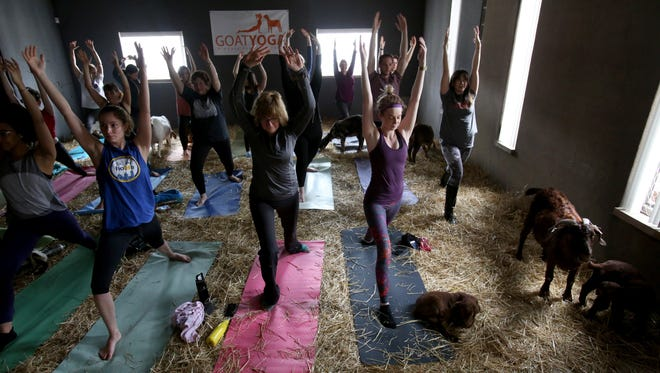 Goats and kids walk and rest on the floor during a Goat Yoga class held at Pingree Farms in Highland Park, Michigan on Saturday, May 6, 2017.