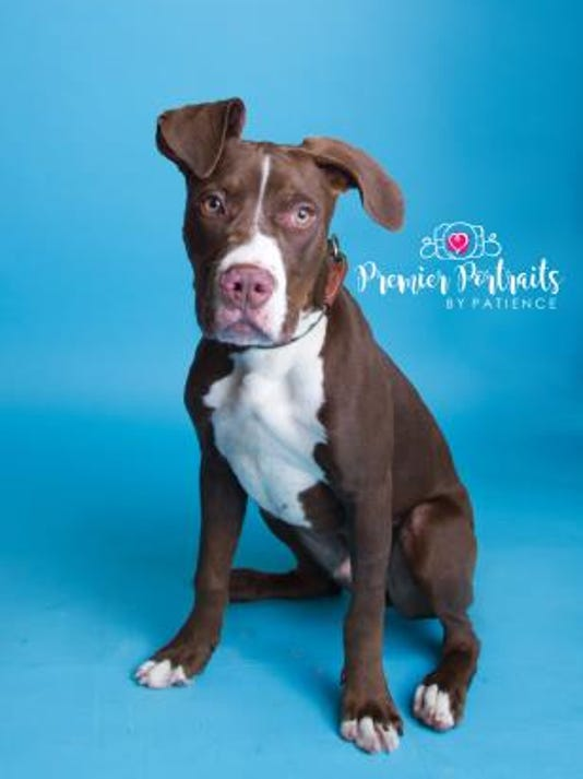 636420435535138697-WDH-1002-Pet-of-the-Week-Buddy.jpg