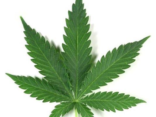 marijuana_leaf_8640646_ver1.0_640_480.jpg