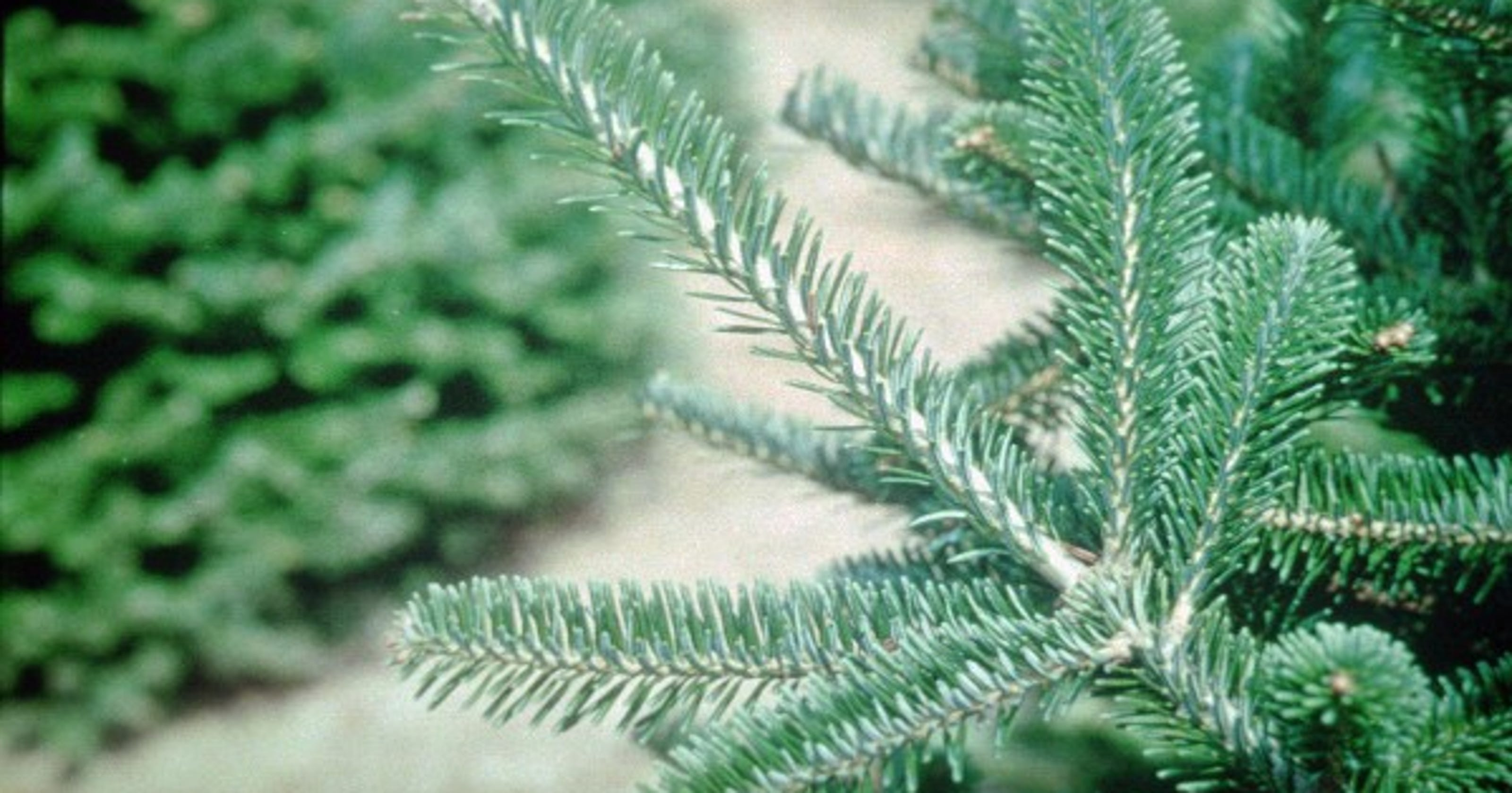 finding the perfect christmas tree amid reports of nationwide shortage - National Christmas Tree Association