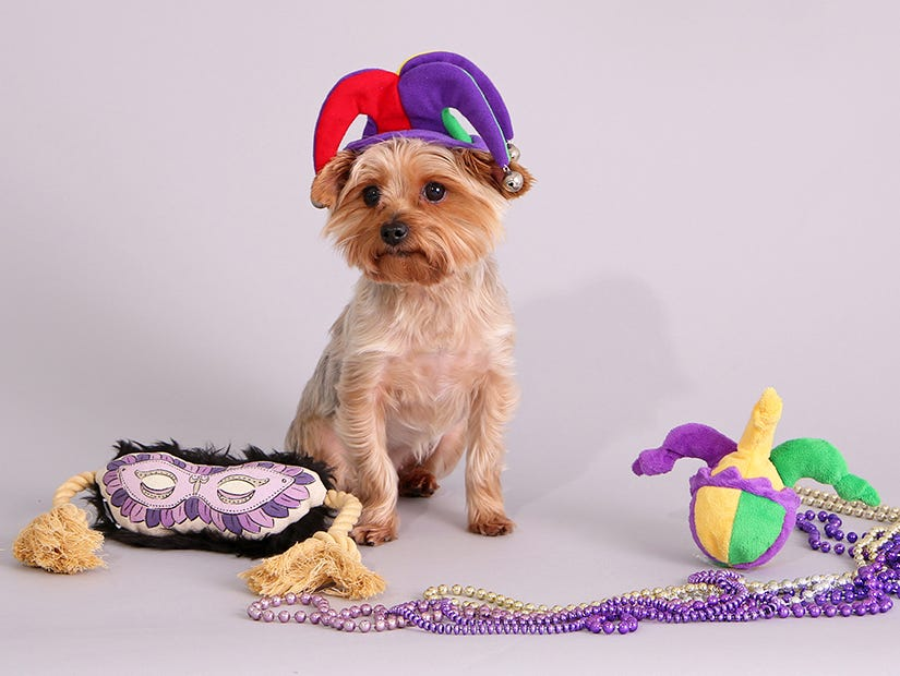 Get a free toy with any purchase on BarkShop.
