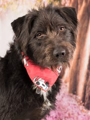 Major is available for adoption at 952 W. Melody Ave.
