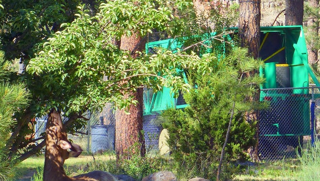 When the zipline was closed, elk frequented the site.