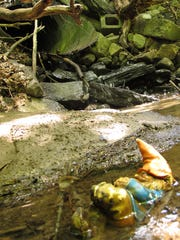 A discarded garden gnome lies in Morehouse Brook at