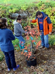 Webster Thomas earth science teacher Steve Fedor guides Amelia Koehn, left, and Celia Darling as they plant a tree.