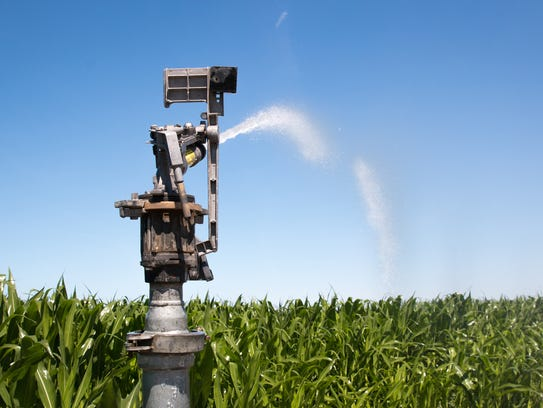 An irrigation sprinkler sprays a cornfield in Grandview,