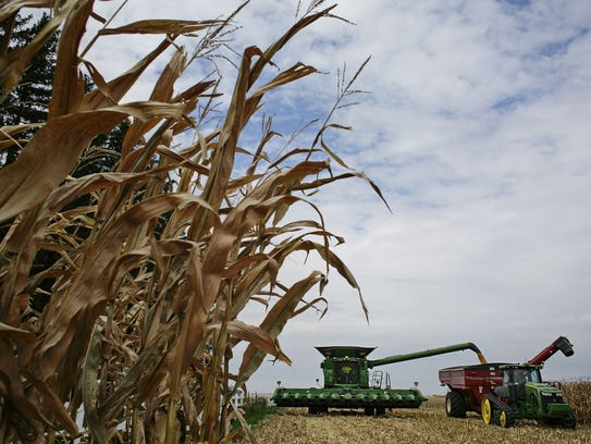 An Iowa farmer harvests commercial corn from land his
