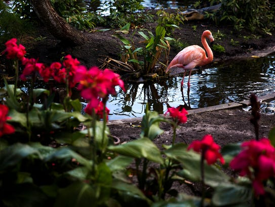 A flamingo wades in the water during Yoga with the