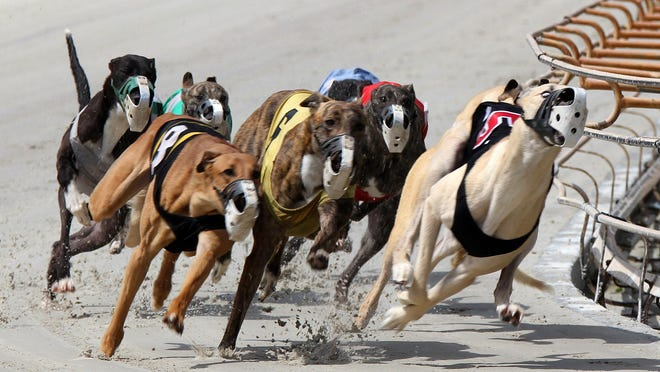 All of the greyhounds that raced in Daytona Beach in recent years have found new homes thanks to a massive adoption effort.