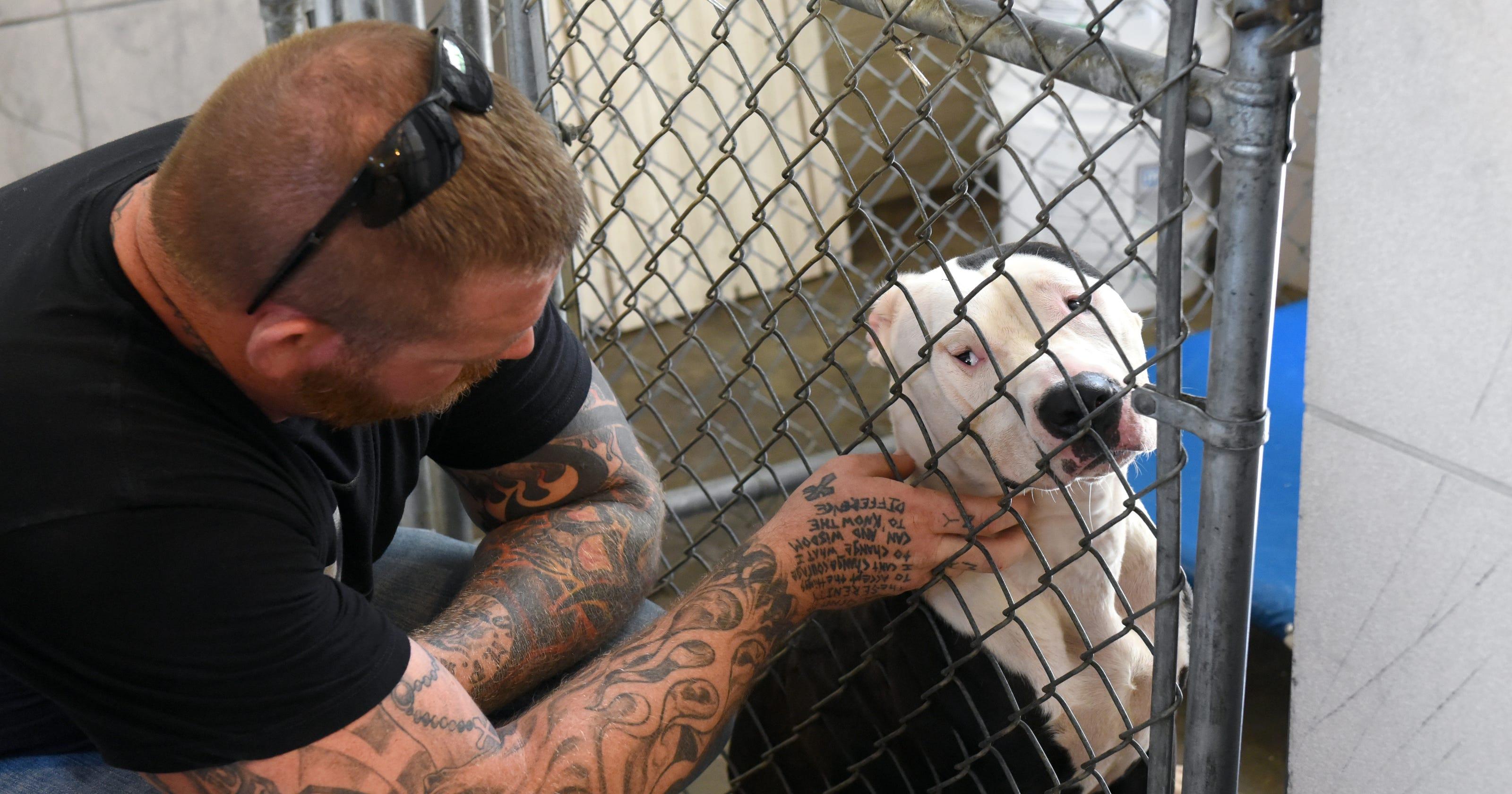 Petizione · Shut down the horrific dog pound in Constanza