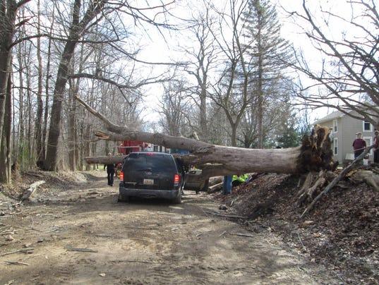 fatal crash tree.JPG