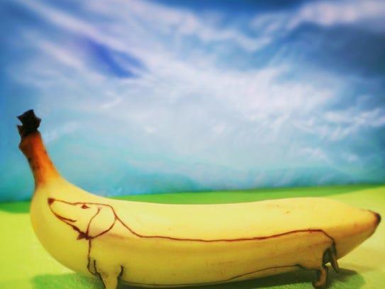 Dog on banana.