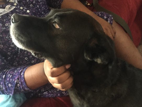 Bently, a Labrador/German Shepard mix, chased away the men who tried to break into his family's home Monday morning.