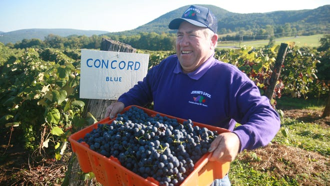 Rich Jerome is seen here with a tray of concord grapes at Jerome's U-Pick Fruit Farm in Naples. He died unexpectedly Aug. 17 at the age of 71.