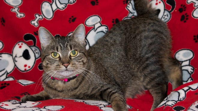 Pets are available for adoption from Marshfield Area Pet Shelter.