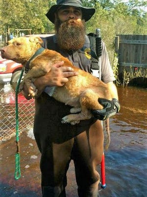 Aiken County Code Enforcement Officer Patrick Miller saved this dog from drowning when water from a flash flood rose to the dog's nose. The dog was unable to escape on its own because it was attached to a short, heavy chain.