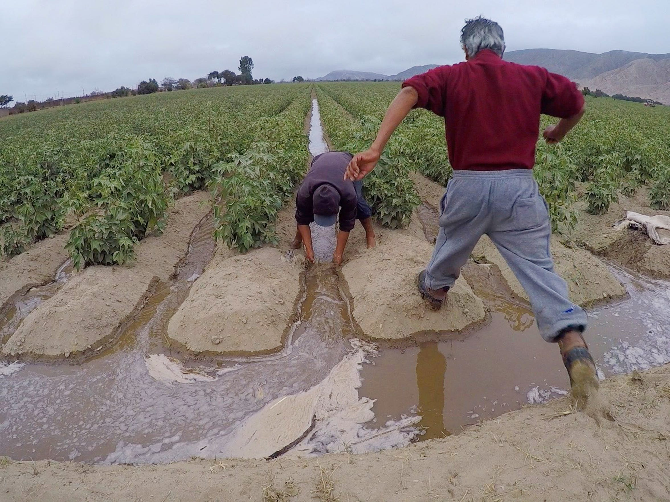 The costs of Peru's farming boom