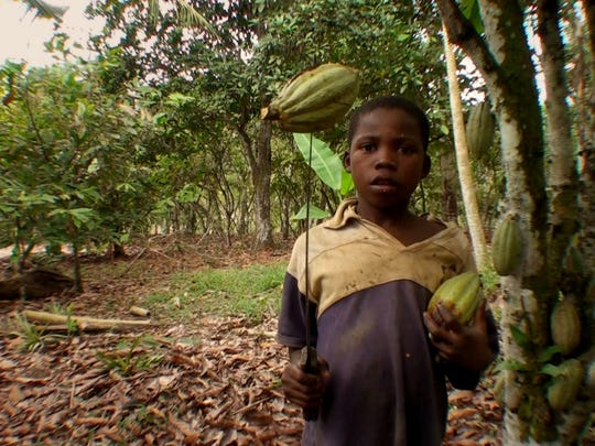A young boy holds a cacao pod on the end of a machete