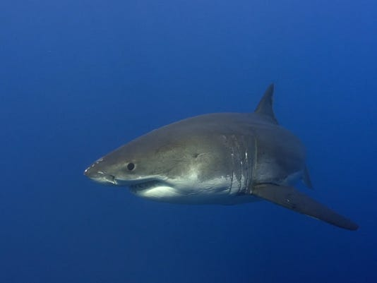 635995997211231125-shark.jpg