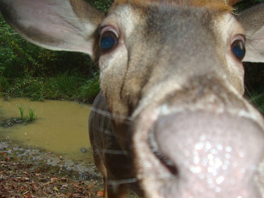 """Korber says animals are naturally curious and like to """"nose"""" the camera, leading to some interesting if unintended photos."""