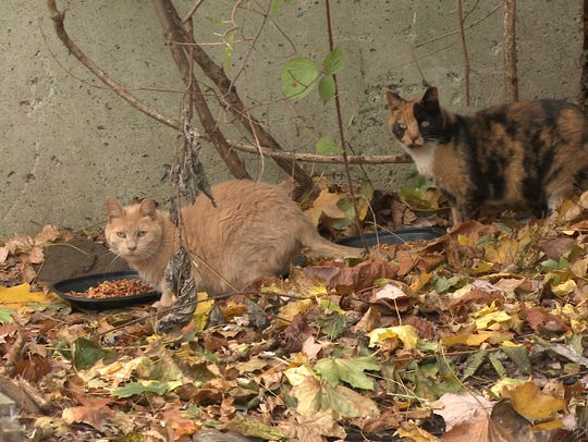 A feral cat colony in Rockland County.
