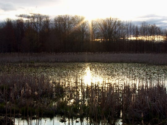 "The Great Swamp, as filmed by Scott Morris for the documentary ""Saving the Swamp: Battle to Defeat the Jetport."""