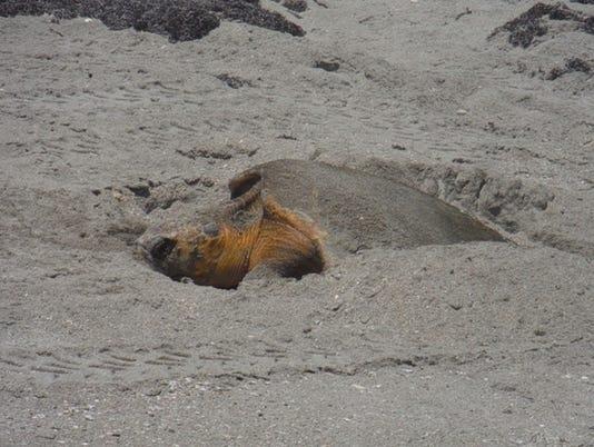 0207-ynsl-sea-turtle-2.jpg