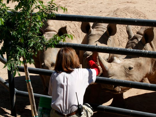 Before leaving Africa, Wildlife World's three female Southern White Rhinos had armed guards to protect them from poachers.