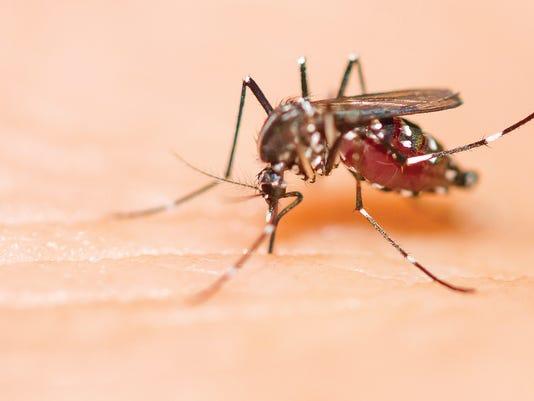 636596533425971875-mosquito.jpg