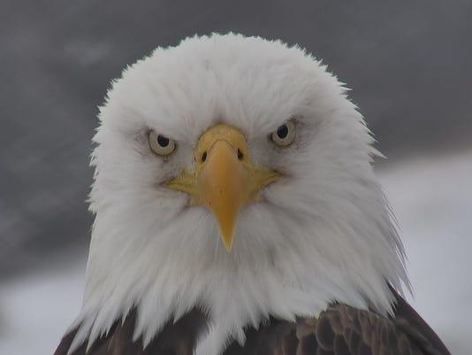 636606272385584181-Eagle3.jpg