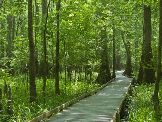 South Carolina: Congaree National Park - Discover 25 miles of hiking trails and a 2.4-mile boardwalk at Congaree National Park.