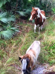 She loved to come with us on trail rides, whether under